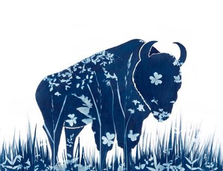 le petit bison 22x30